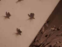 I sette corvi. La grande Fiabezza © A.D.Photo